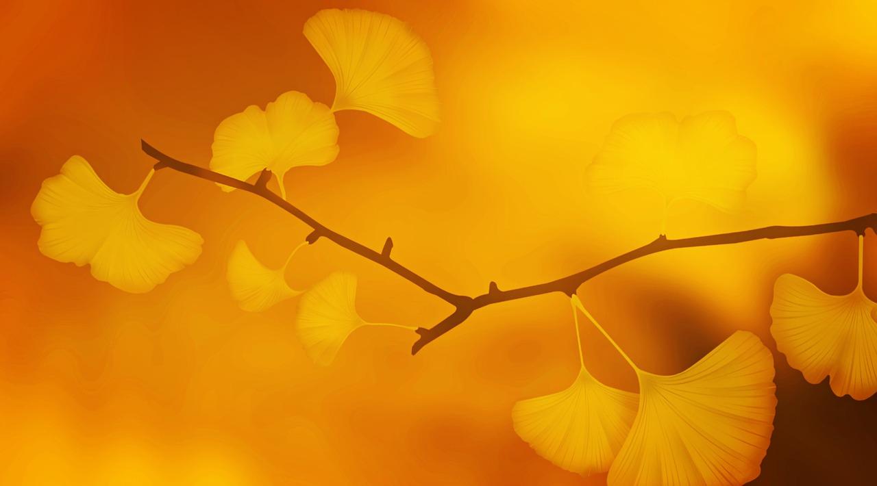 Psytribe Autumn